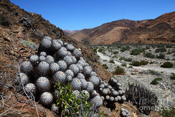 Photograph - Llanos De Challe National Park Chile by James Brunker