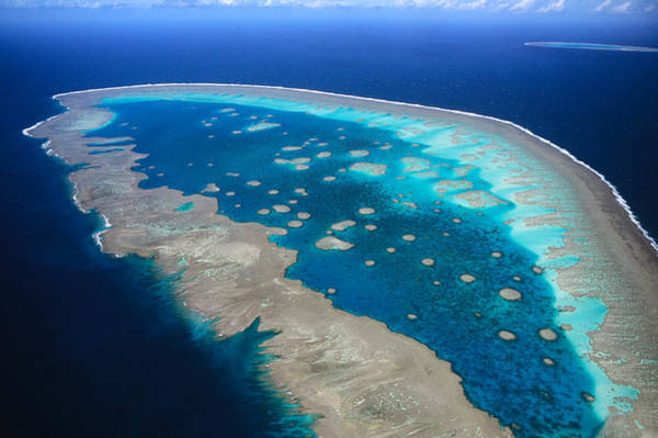 Photograph - Llewellyn Reef Great Barrier Reef by D. & E. Parer-Cook
