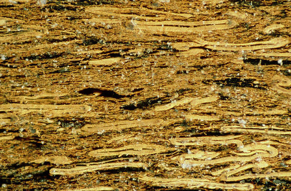 Fossil Fuel Photograph - Lm Of Section Through Coal Sample by Power And Syred/science Photo Library