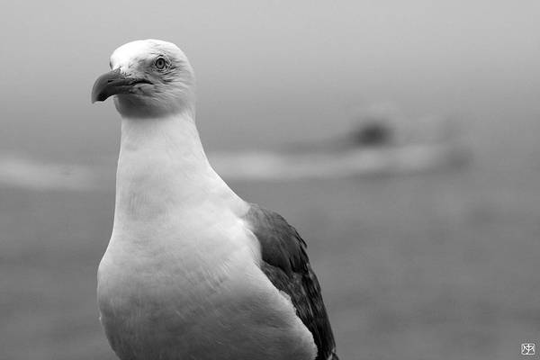 Photograph - Lobster Boat Gull by John Meader