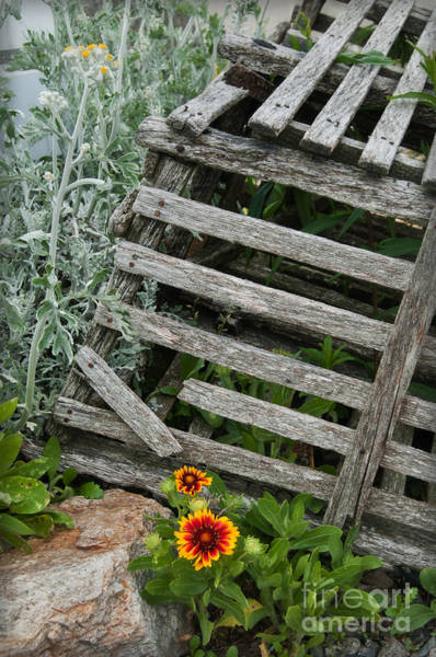Photograph - Lobster Trap Flowers by Sharon Seaward
