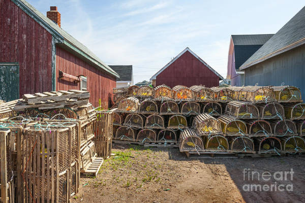 Traps Photograph - Lobster Traps In North Rustico by Elena Elisseeva