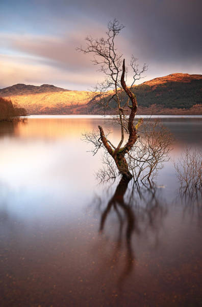 Photograph - Loch Lomond Tree by Grant Glendinning