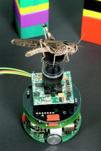 Migratory Photograph - Locust Vision Robot by Simon Fraser/science Photo Library