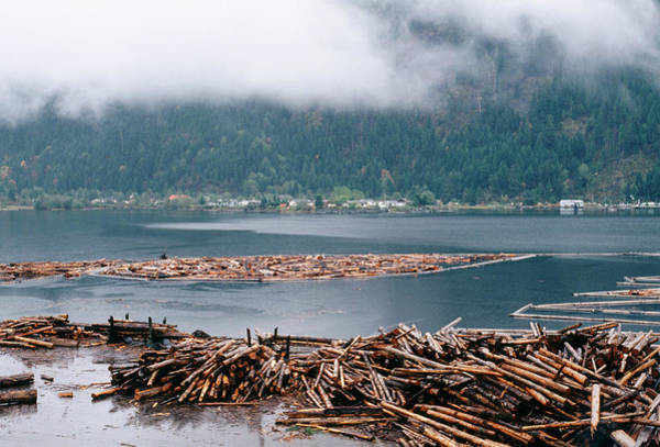 Forestry Photograph - Log Booms And Sorting Area In Vancouver Island by David Nunuk/science Photo Library