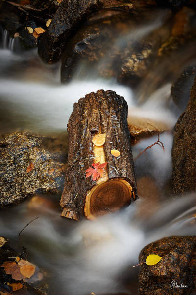 Christine Falls Photograph - Log In River by Christine Hauber