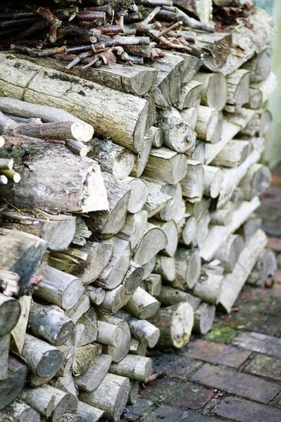 Logs Photograph - Log Pile by Gustoimages/science Photo Library