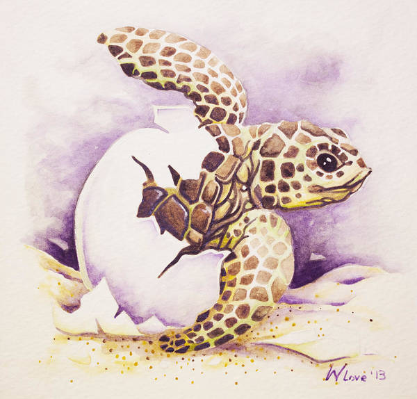 Painting - Loggerhead Hatchling by William Love