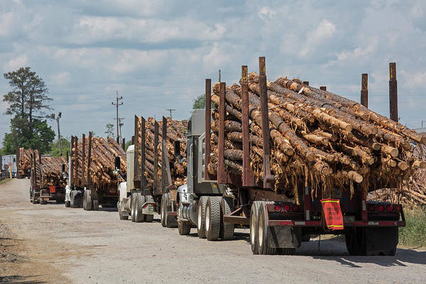 Mccormick Photograph - Logging Industry by Jim West/science Photo Library