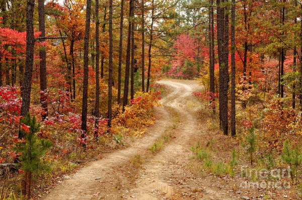 Photograph - Logging Road In The Ouachita National Forest - Beaver's Bend State Park - Poteau - Oklahoma Arkansas by Silvio Ligutti