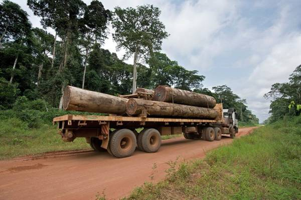 Wall Art - Photograph - Logging Truck In The Congo Basin by Tony Camacho/science Photo Library