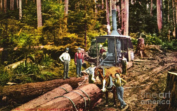 Photograph - Logging With Steam Donkey Engine Near Olympia Washington Circa 1900 by California Views Archives Mr Pat Hathaway Archives