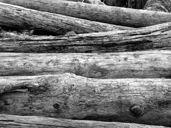 Photograph - Logs by Gerry Bates