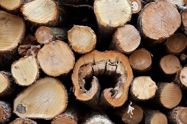 Logs Photograph - Logs by Jim West