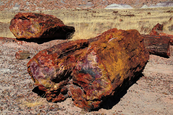 Petrified Logs Photograph - Logs, Petrified Forest National Park by Michel Hersen