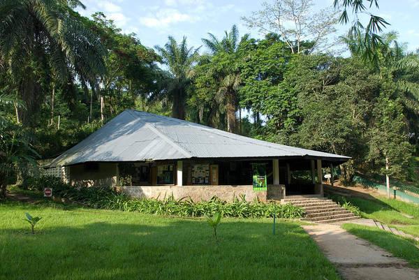 Wildlife Sanctuary Photograph - Lola Ya Bonobo Sanctuary by Tony Camacho/science Photo Library