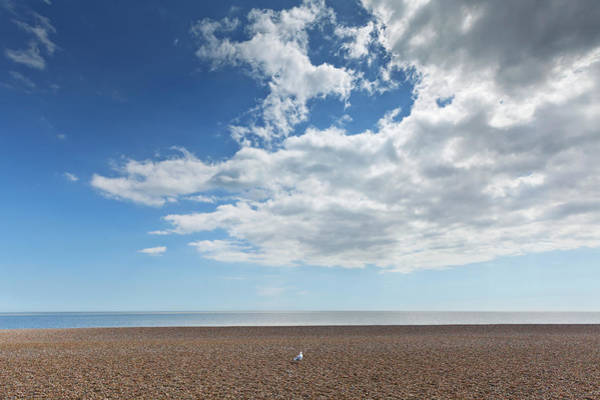 Wall Art - Photograph - Lone Bird On An Empty Beach With Blue by Terence Waeland