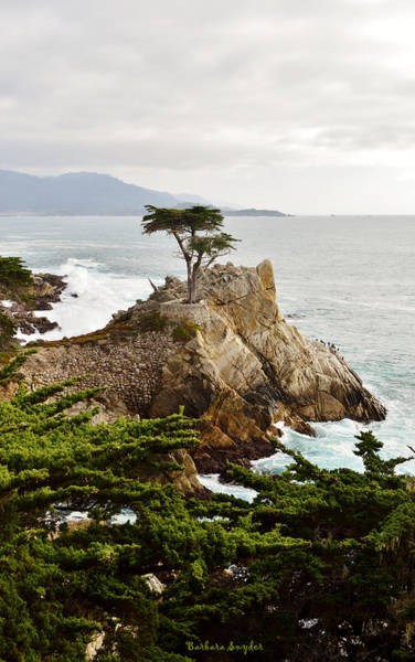 Wall Art - Photograph - Lone Cypress 17 Mile Drive Monetery by Barbara Snyder