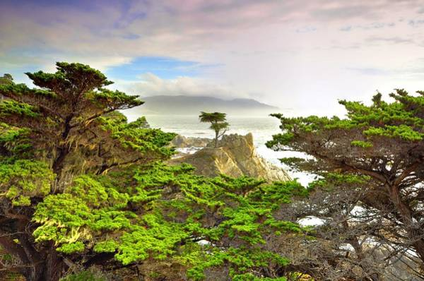 Monterey Cypress Photograph - Lone Cypress By Michael Ontiveros  by California Coastal Commission