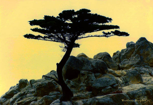 Lone Digital Art - Lone Cypress Companion by Barbara Snyder
