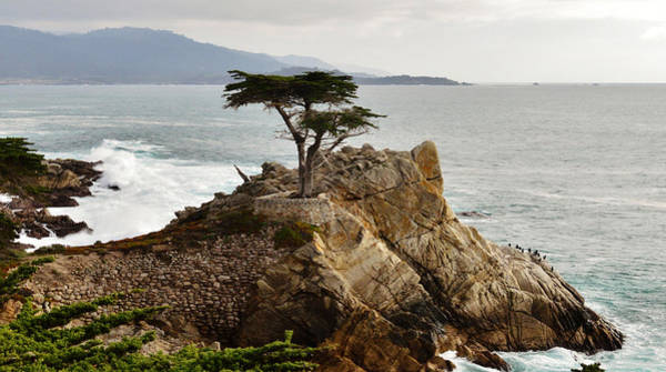 Painting - Lone Cypress Monterey California by Barbara Snyder