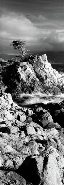 Wall Art - Photograph - Lone Cypress On The Coast, Pebble by Panoramic Images