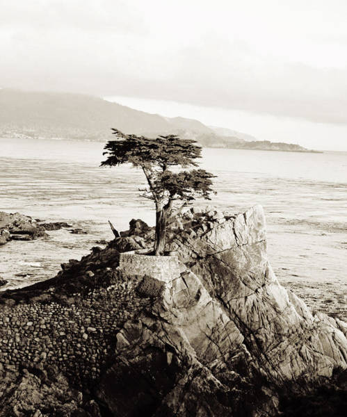 Monterey Cypress Photograph - Lone Cypress by Scott Pellegrin