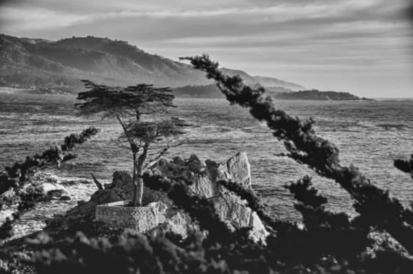 Monterey Cypress Photograph - Lone Cypress Tree Bw by Ron White