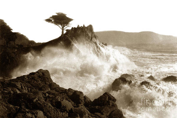 Photograph - Lone Cypress Tree On  Midway Point Pebble Beach California Circa 1916 by California Views Archives Mr Pat Hathaway Archives