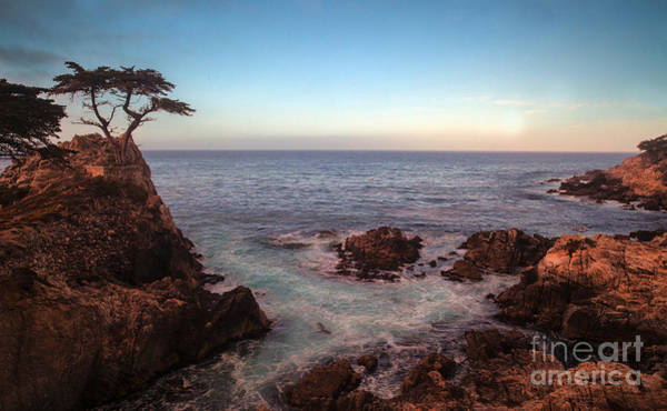 Cyprus Wall Art - Photograph - Lone Cyprus Pebble Beach by Mike Reid