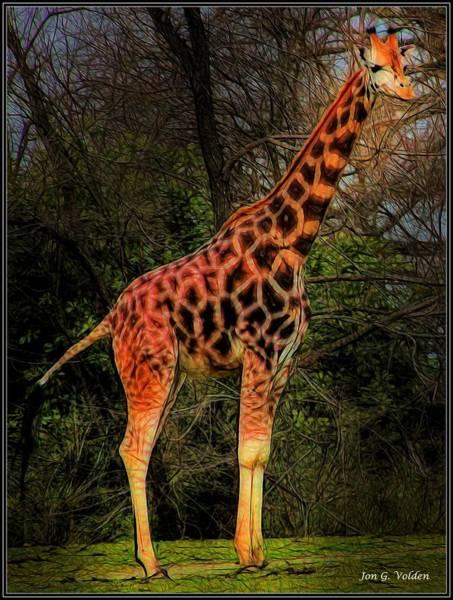 Painting - Lone Giraffe by Jon Volden