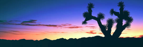 Yucca Brevifolia Photograph - Lone Joshua Tree Yucca Brevifolia by Panoramic Images
