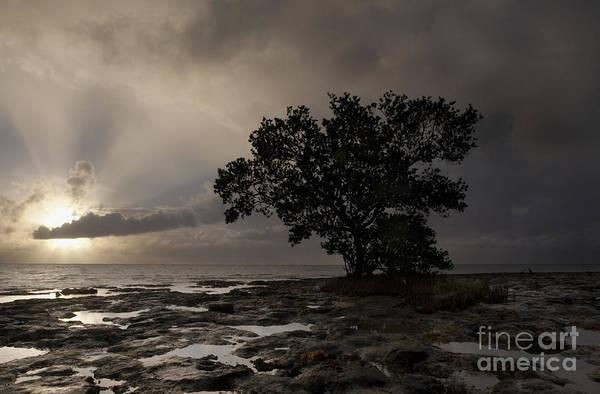 Bahia Honda Photograph - Lone Mangrove by Keith Kapple