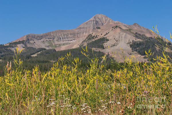 Photograph - Lone Mountain And Wildflowers by Charles Kozierok