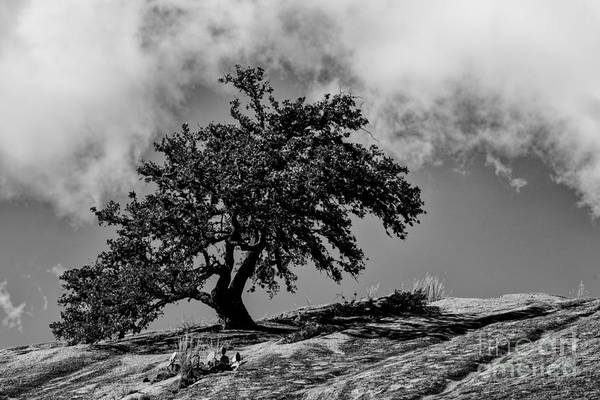 Photograph - Lone Oak Atop Little Rock - Enchanted Rock State Natural Area Texas Hill Country by Silvio Ligutti