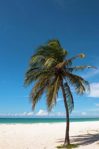 Palm Beach Photograph - Lone Palm Tree, Palm Beach, Aruba by Alberto Biscaro
