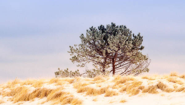 Photograph - Lone Pine by Michael Hubley