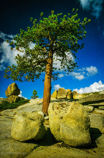 Photograph - Lone Pine by Ross Henton