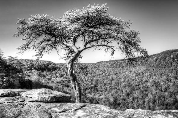 Wall Art - Photograph - Lone Pine Tree Buzzard Point 2 by Douglas Barnett