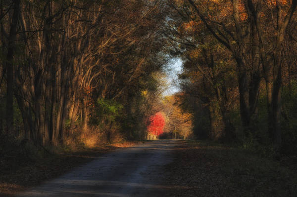 Photograph - Lone Red Maple by Darlene Bushue