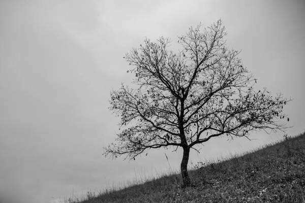 Photograph - Lone by Ryan Heffron