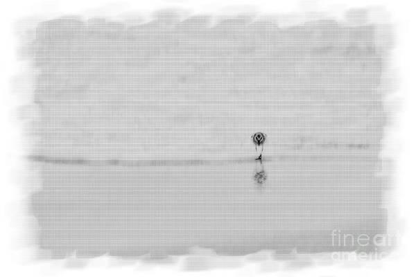 Photograph - Lone Sandpiper On Beach by Dan Friend