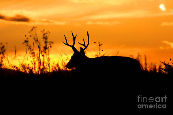 Photograph - Lone Traveler by Jim Garrison