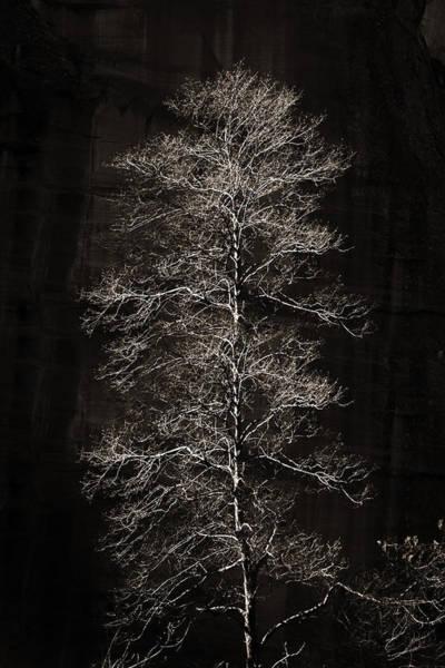Photograph - Lone Tree by Bob Coates