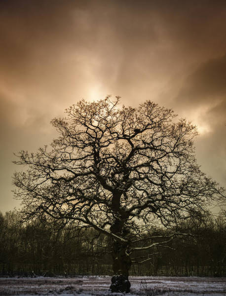 Nature Photograph - Lone Tree by Amanda Elwell
