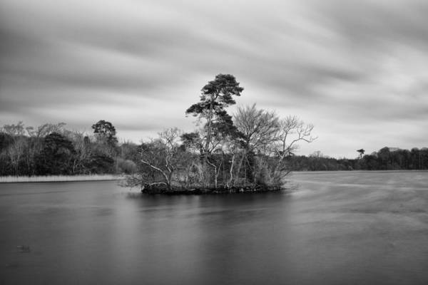 Conan Photograph - Lone Tree by Conan Mercer