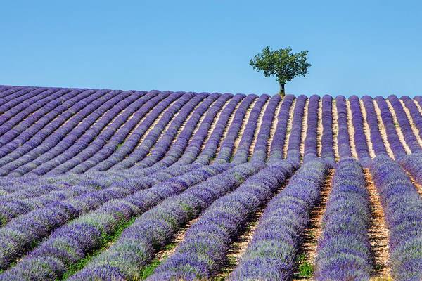 Fragrance Photograph - Tree In Provence by Jurgen Lorenzen