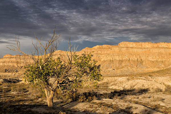 San Rafael Wilderness Wall Art - Photograph - Lone Tree In The Desert by Kathleen Bishop