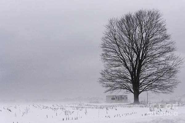 Lone Tree In The Fog Art Print