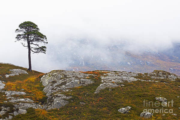 Wall Art - Photograph - Lone Tree In The Mist by Louise Heusinkveld